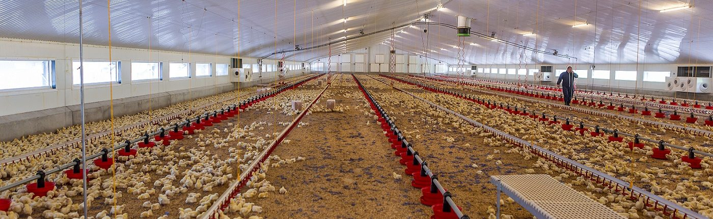 Heating and cooling in poultry shed